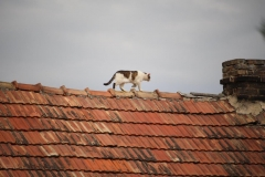 Franz am Dach - eindeutig!